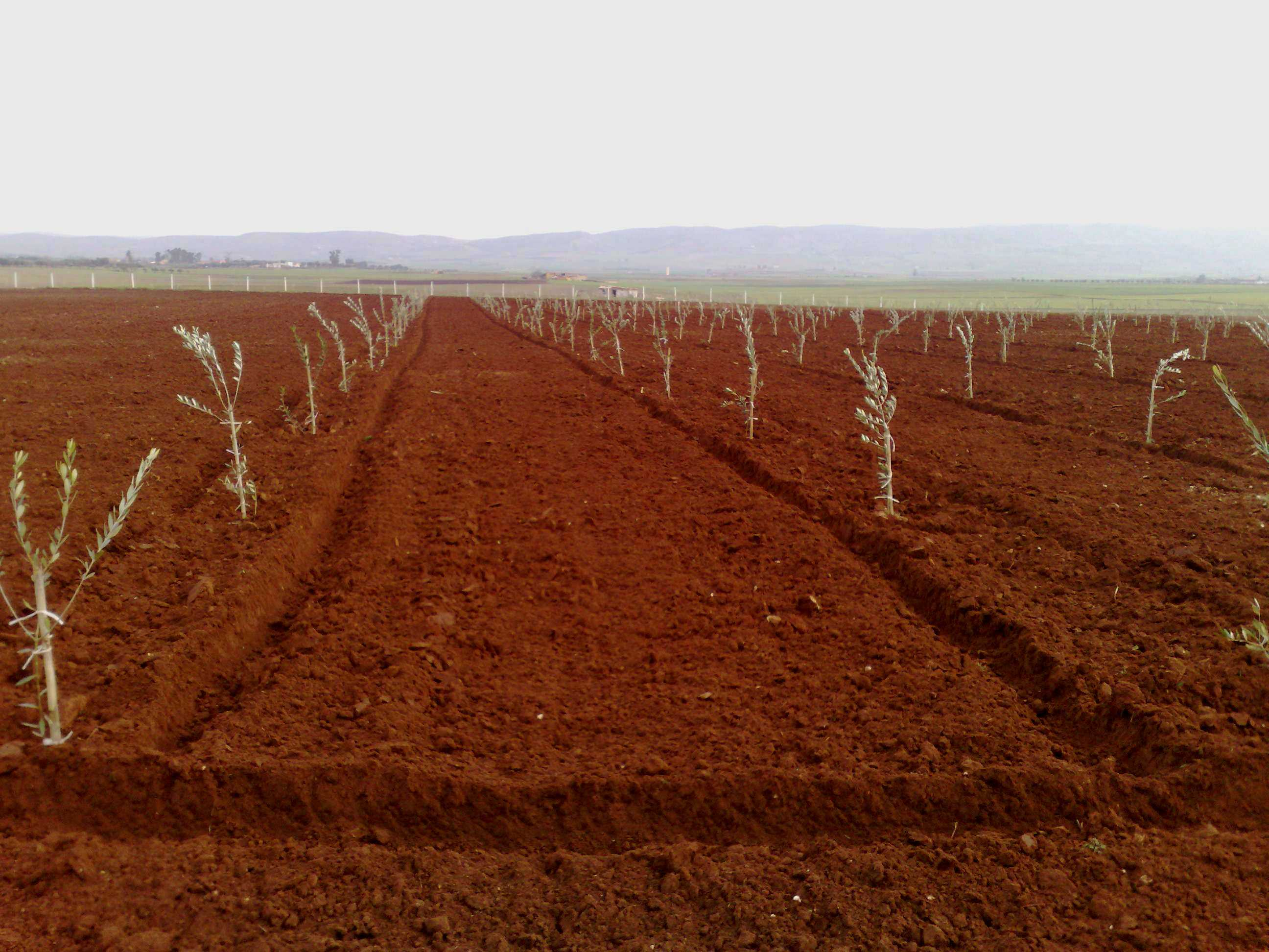 Terrain agricole a vendre a meknes for Construction terrain agricole